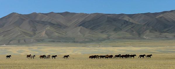 Horses running across mounatin plateau