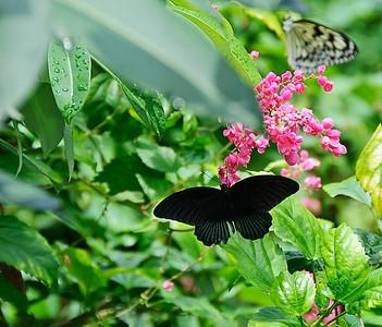 Sentosa butterfly garden