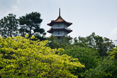 Chinese Japanese Gardens - pagoda