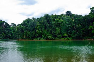 MacRitchie Reservoir - forest
