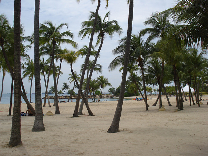 Siloso Beach Trees - Sentosa Island