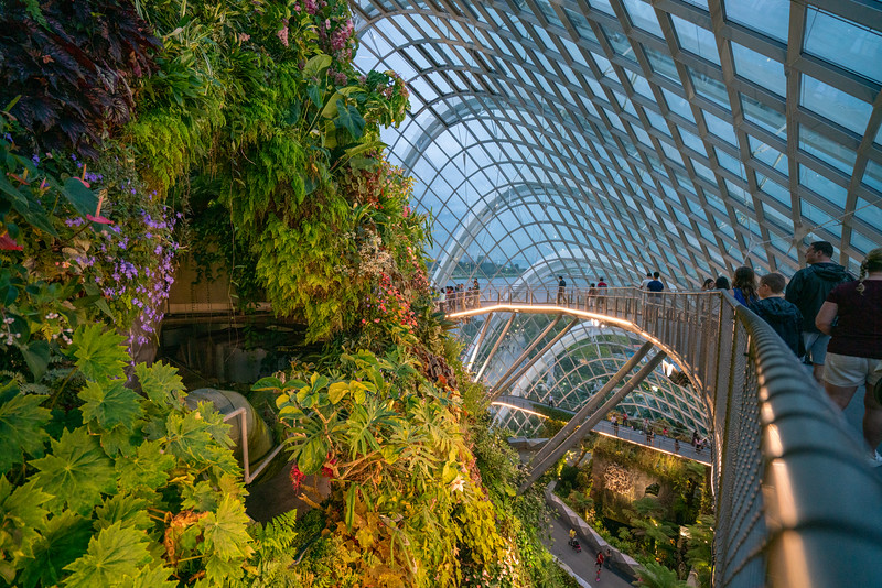Inside the Cloud Forest.