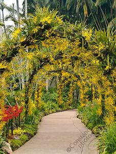 Singapore Botanic Gardens, Orchid Garden - golden arches