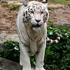 RTW Trip - Singapore Zoo