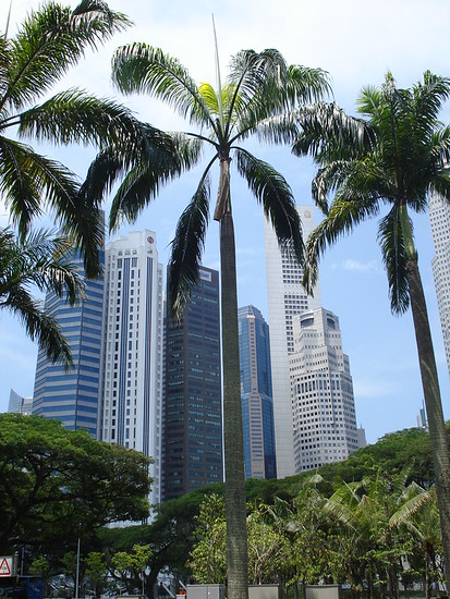 Skyscrapers And Palm Trees - Singapore
