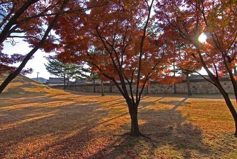 Autum Trees in Park at Gyeongu, South Korea
