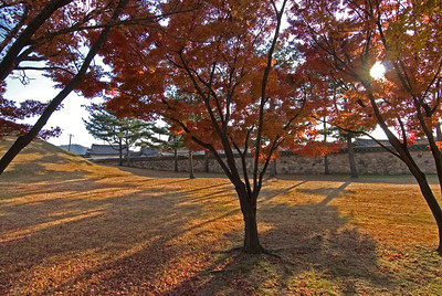Autum Trees in Park at Gyeongu, South Korea