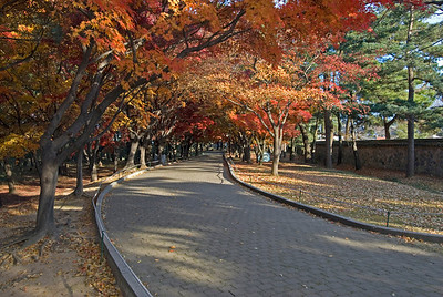 Autumn tree lined path in South Korea