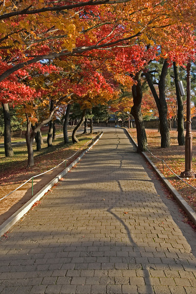Brick path lined with autumn trees in Seoul, South Korea