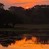 Sunrise in Yala National Park