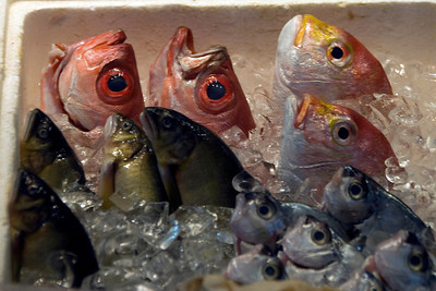 Close-up of fish heads at night market Taipei, Taiwan