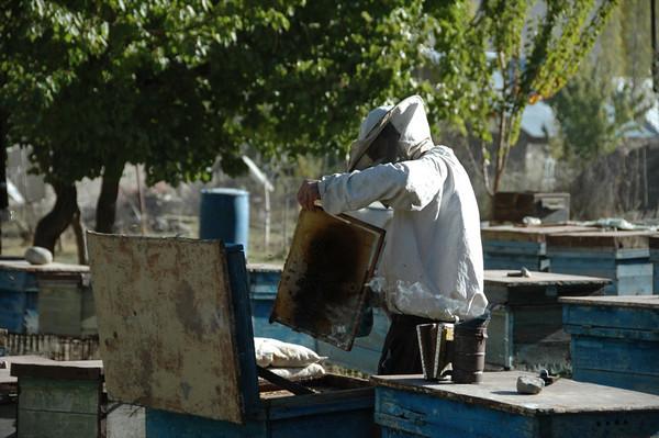 Beekeeper - Khorog, Tajikistan