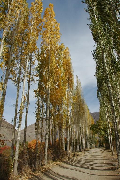 Autumn Trees - Pamir Mountains, Tajikistan