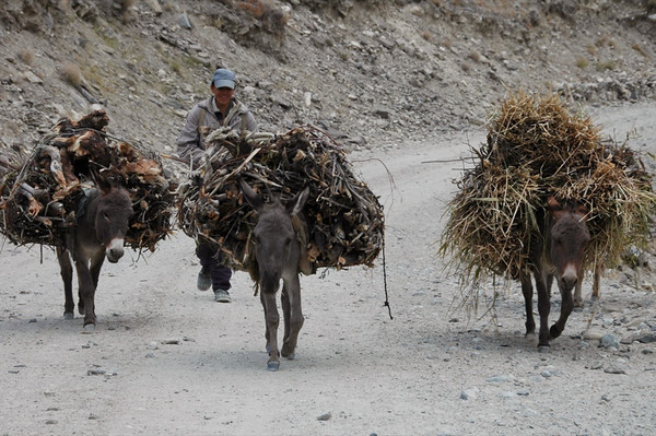 Donkeys with Heavy Loads - Wakhan Valley, Tajikistan