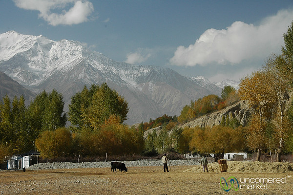Farmers Preparing for Winter - Wakhan Valley, Tajikistan