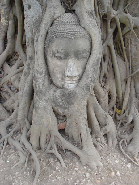 Head Of The Sandstone Buddha Image Wat Mahathat, Ayuthaya - Thailand.
