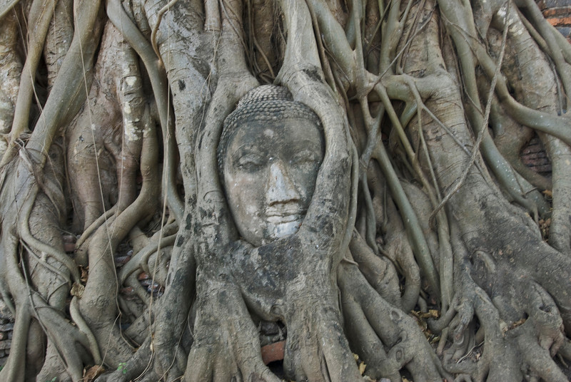 Carved Buddha face among roots of a tree - Ayutthaya, Thailand