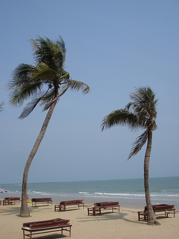 Beach Trees, Cha-Am - Thailand