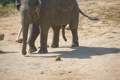 Shot of elephant shadows and legs - Chiang Mai, Thailand