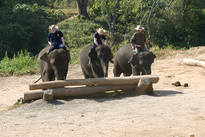 Elephants moving a log during performance in Chiang Mai, Thailand