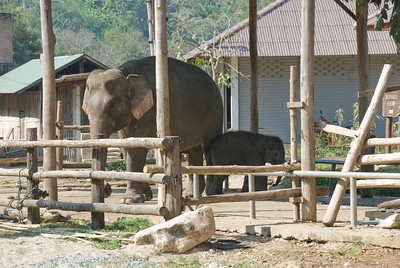 Mama and Baby Elephant spotted in Chiang Mai, Thailand