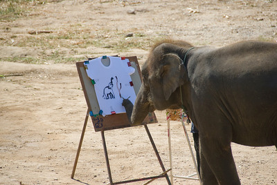 Elephant painting using trunks - Chiang Mai, Thailand