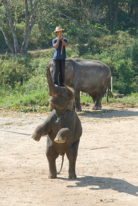 Namatase balancing on top of a standing elephant - Chiang Mai, Thailand
