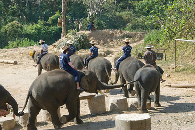 Men sitting on top of elephant during show - Chiang Mai, Thailand