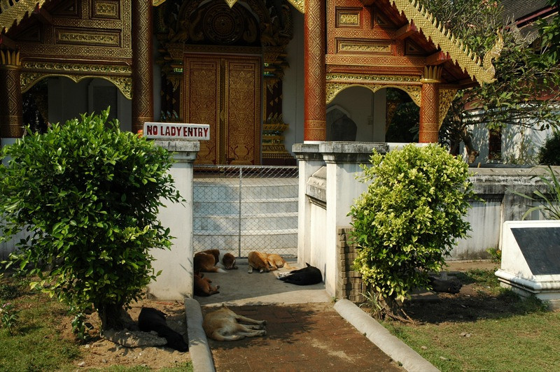 Temple Guard Dogs Sleeping - Chiang Mai, Thailand