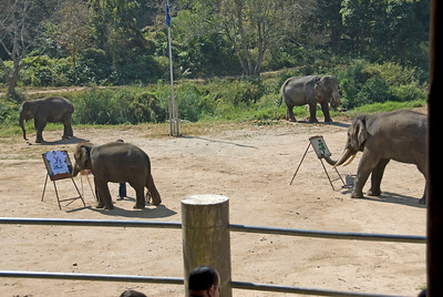 Elephants painting during show in Chiang Mai, Thailand
