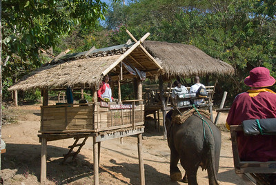 Elephant food vendor in Chiang Mai, Thailand