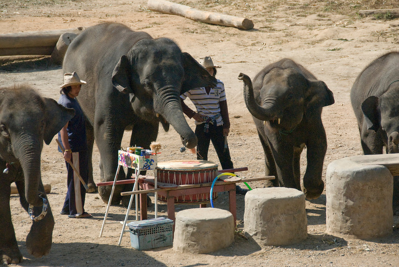 Elephants performing with drums - Chiang Mai, Thailand