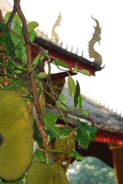Jackfruit and Dragons - Chiang Mai, Thailand