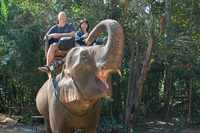 Me riding on an elephant in Chiang Mai, Thailand