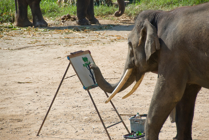 Elephant painting using its trunks - Chiang Mai, Thailand