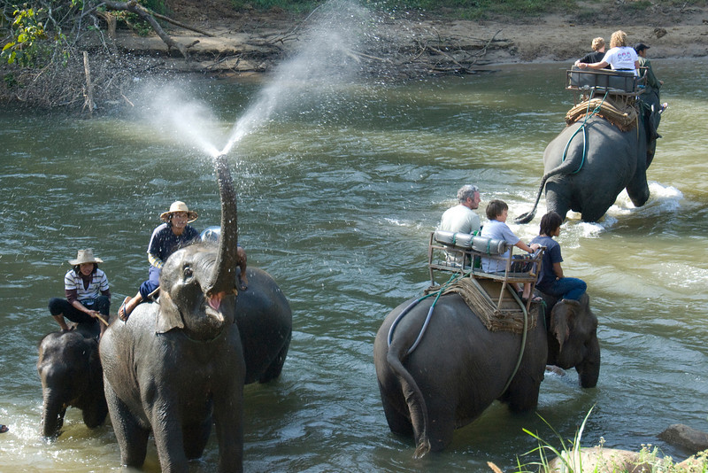 Tourists crossing the river while riding the elephant - Chiang Mai, Thailand