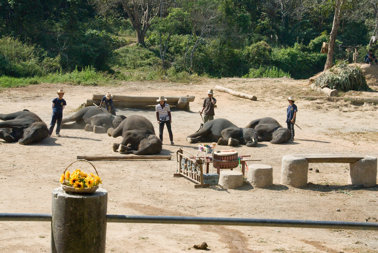 Elephant performance in Chiang Mai, Thailand