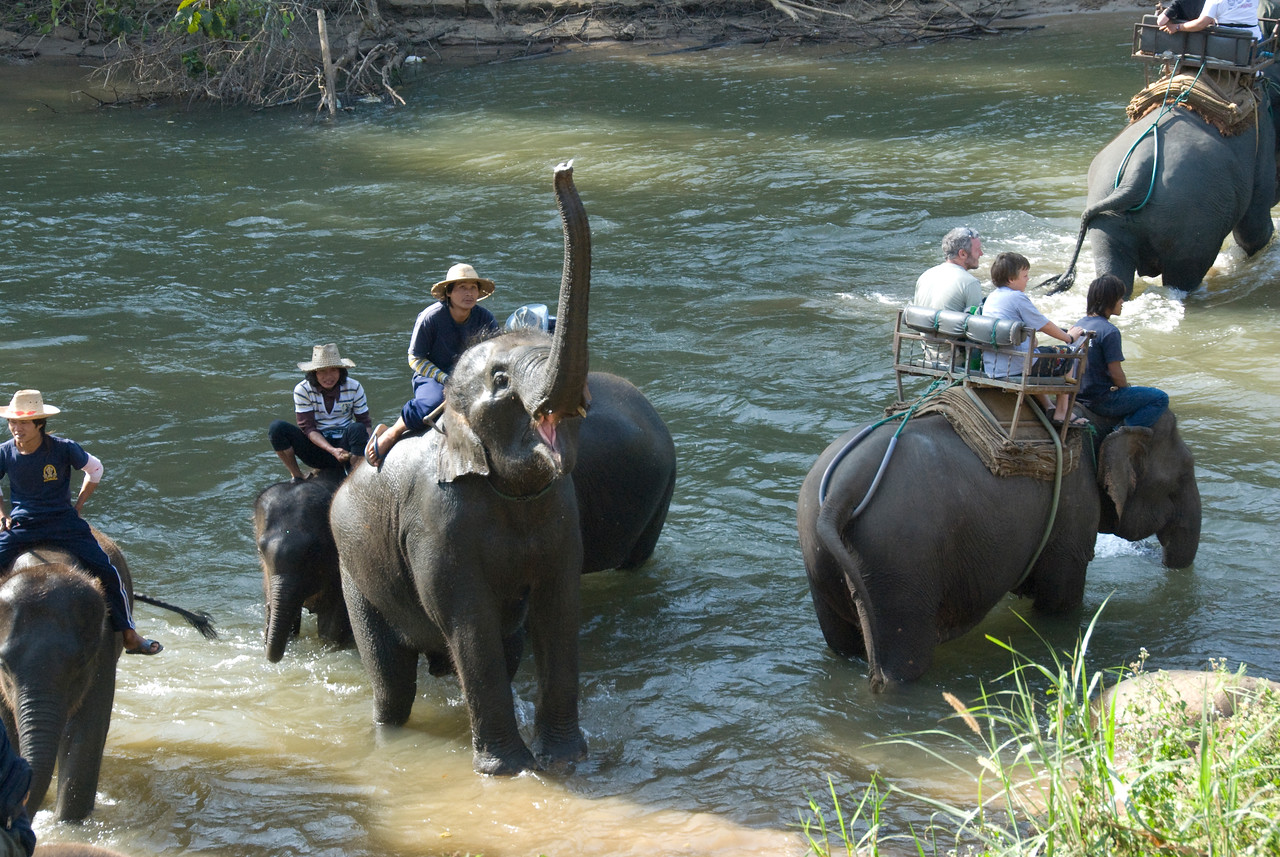 Elephants crossing the river in Chiang Mai, Thailand