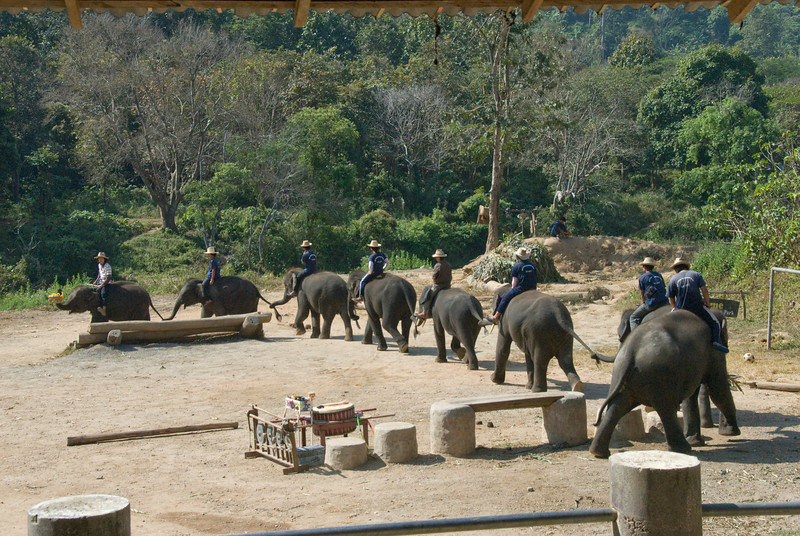 Elephant train show in Chiang Mai, Thailand