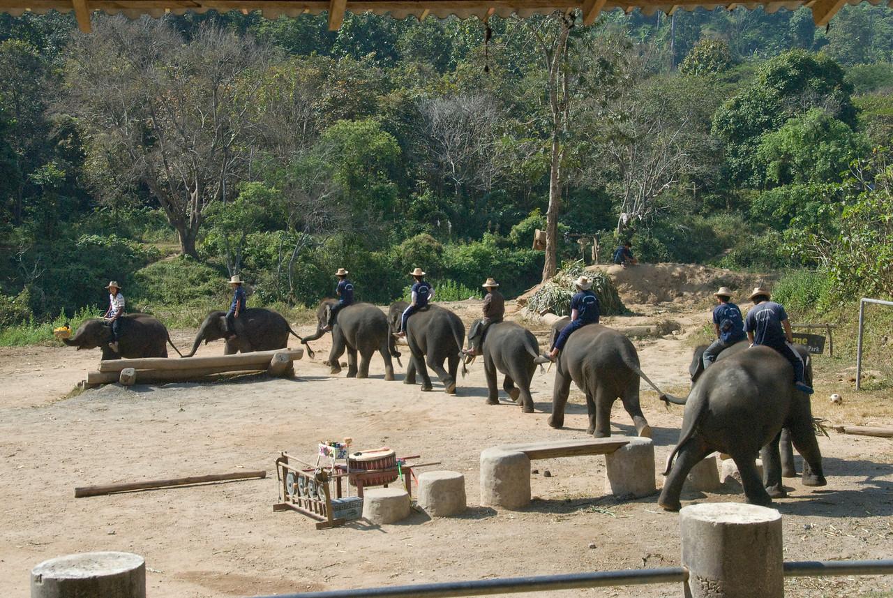 Elephant train show in Chiang Mai, Thailand