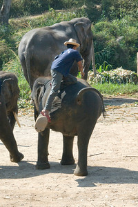 Man climbing on the back of an elephant - Chiang Mai, Thailand