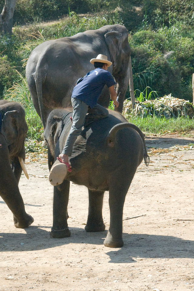Man climbing on the back of an elephant - Chiang Mai, Thailand