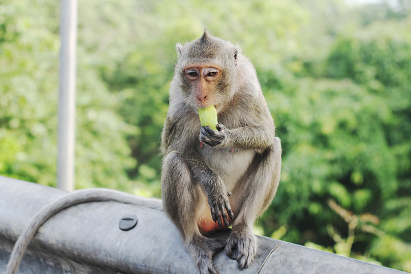 Khao Sam Muk, an area where monkey roam around. October 2014