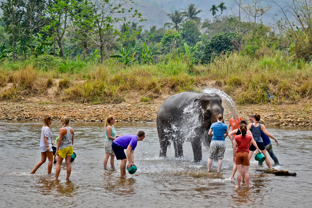 How to Volunteer at Elephant Nature Park in Chiang Mai, Thailand