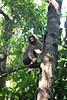 Thai Monkeys