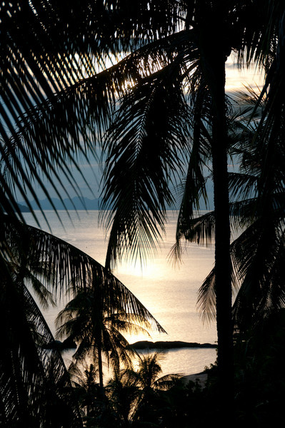 Beautiful sunset and a silhouette of coconut trees in Ko Samui, Thailand