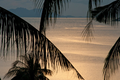 Coconut palm fronds silhouette and calm ocean water - Ko Samui, Thailand