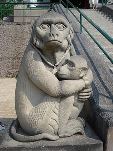 Monkey Mother at Phra Kan Shrine, Lopburi - Thailand.