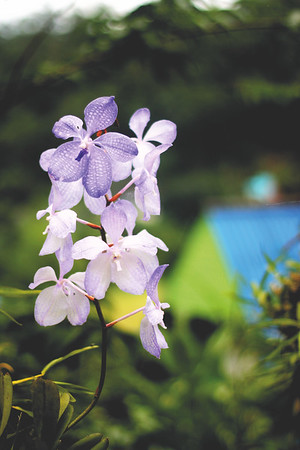 Wild orchids. August 2015