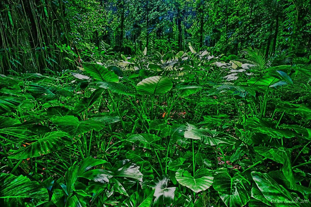 jungle-thailand